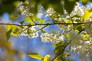 Frühlingserwachen auf Usedom