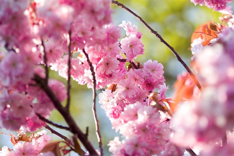 Frühlingsaktion