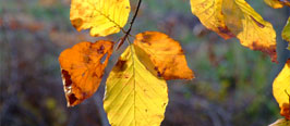 Arrangement - Herbstwanderwoche 13.  bis 18 Oktober 2019