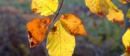 Angebot - Herbstwanderwoche 13.  bis 18 Oktober 2019