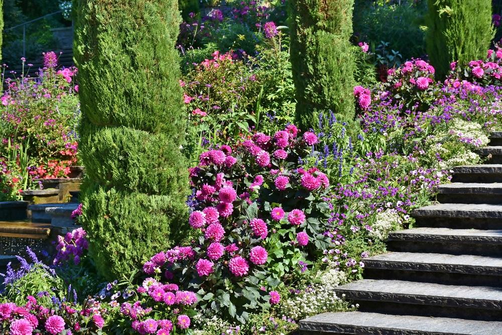 Arrangement - Blütezeit auf der Insel Mainau